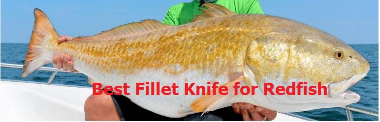 Best Fillet Knife for Redfish